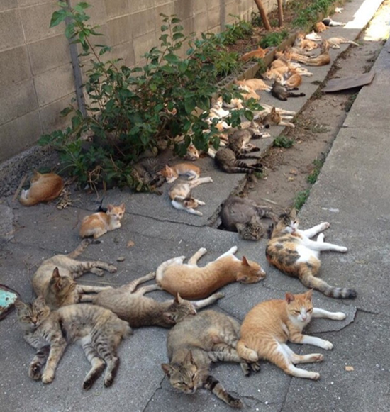Cats-on-the-streets