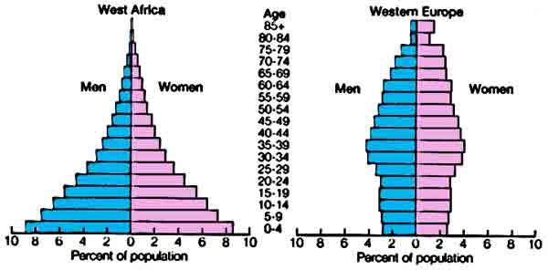 population_pyramid.jpg