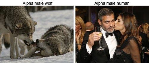 alphamaleexample.jpg
