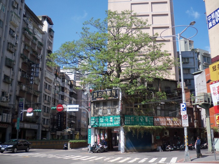 Tree_Grow_throuth_Roof_in_Zhongzheng_District,_Taipei_20090801